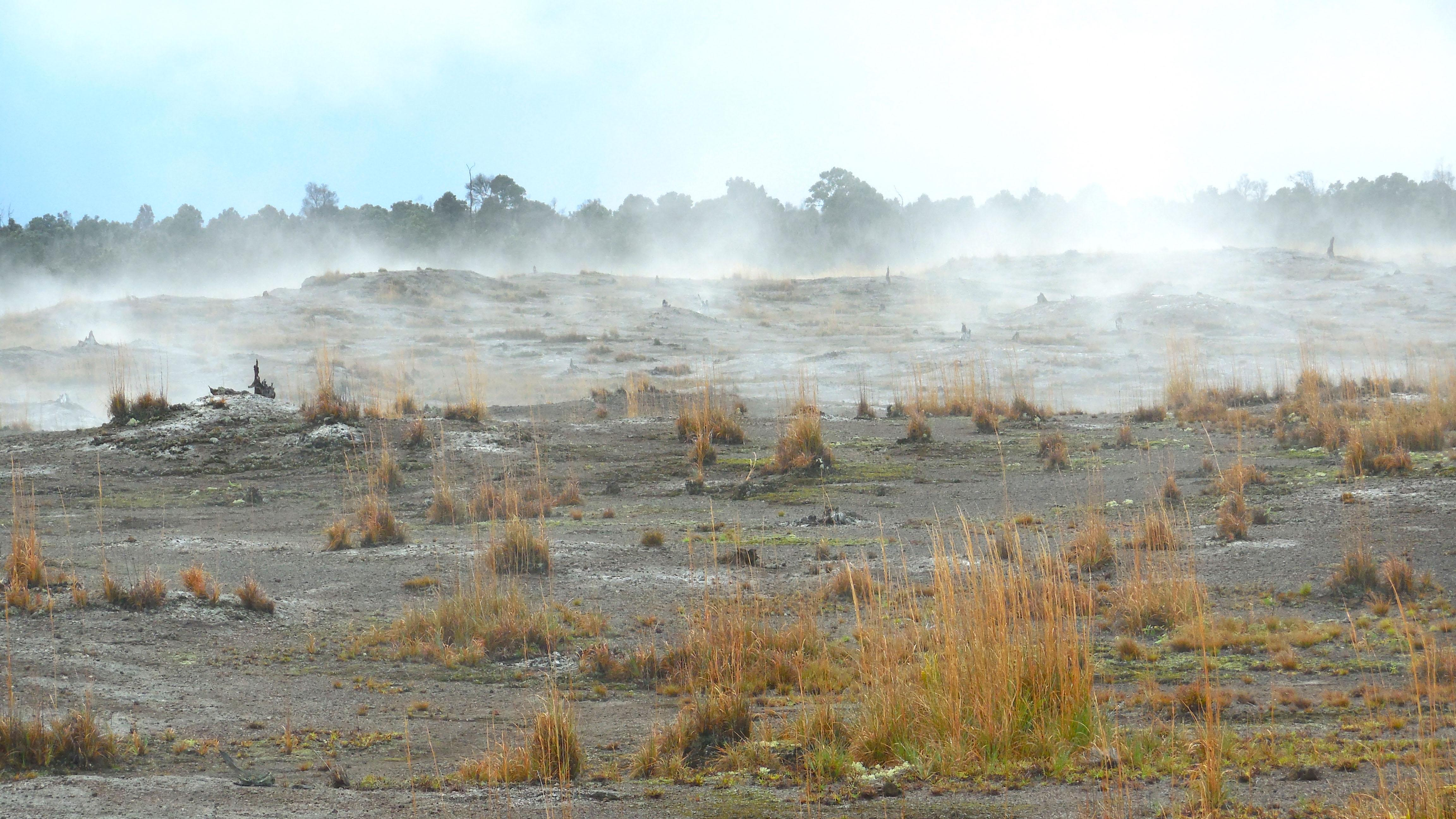 The Earth Microbiome Project aims to catalog all of the world's microbial communities, including those found in the Puhimau Thermal Area of Hawai'i Volcanoes National Park. (G.M. King)