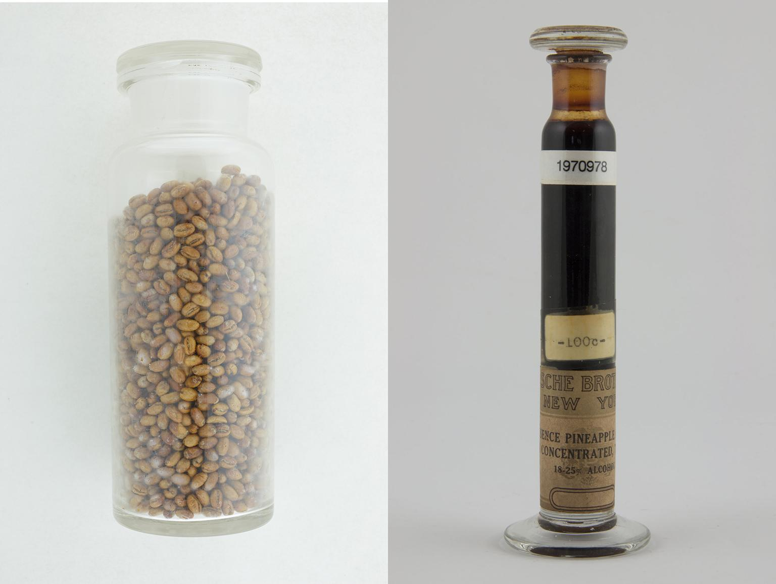 Samples of Jamaica Blue Mountain Coffee, left, and pineapple from the Field Museum's collection of historical specimens. (Courtesy The Field Museum)