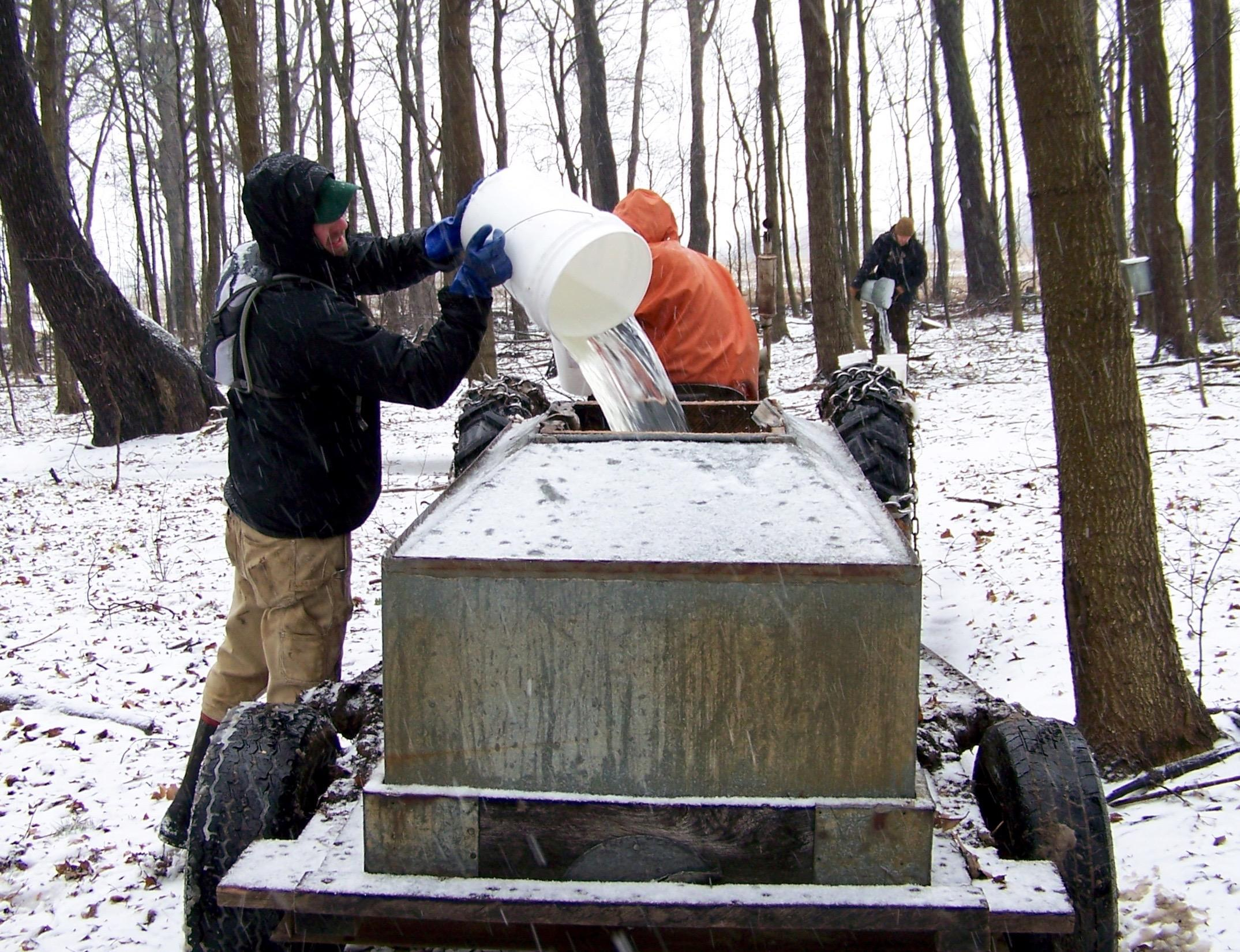 8fa20727c15 Jonathan Funk pouring sap into a gathering tank at Funks Grove. Maple syrup  producers collect sap daily. (Debby Funk)