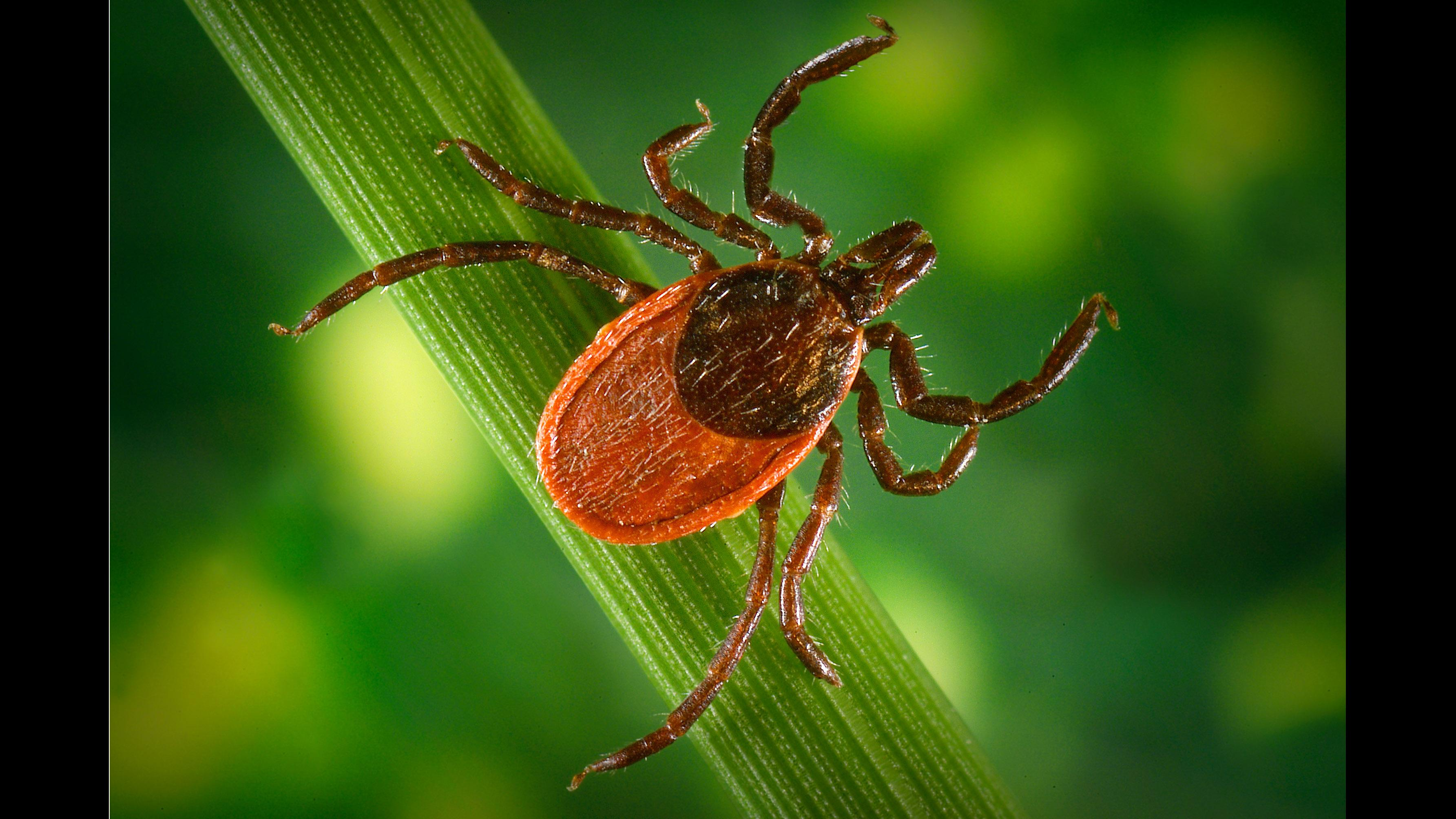 How many ticks live in the forest, on clothes, after a bite, without food, without a proboscis 97