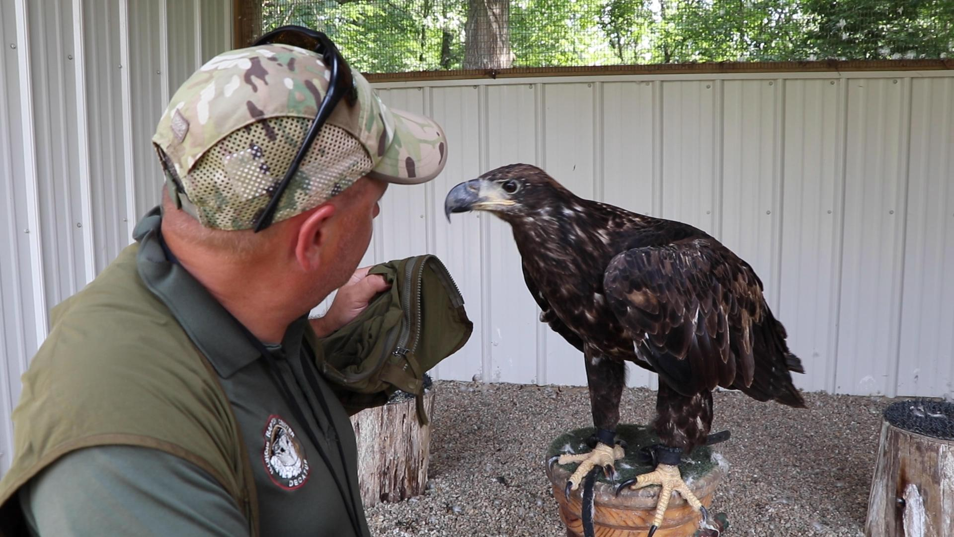 Illinois Raptor Center Program Director Jacques Nuzzo visits Laura, a two-year-old bald eagle that tested positive for West Nile Disease. Bald eagles don't get their white-feathered heads until they're about 5 years old. (Evan Garcia / WTTW News)