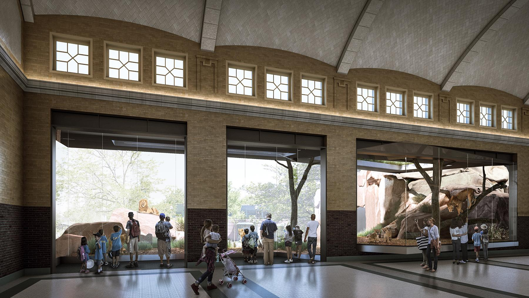 A rendering of the viewing area planned for Lincoln Park Zoo's Kovler Lion House (Courtesy Lincoln Park Zoo)