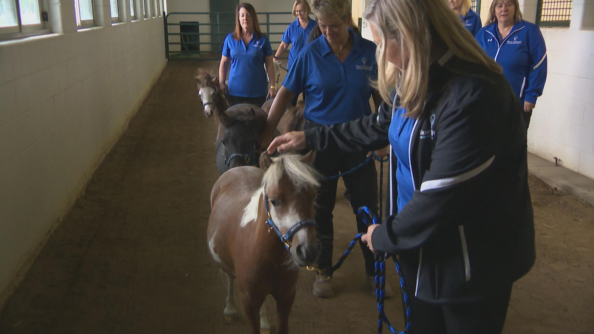 Meet Some Small But Mighty Miniature Therapy Horses