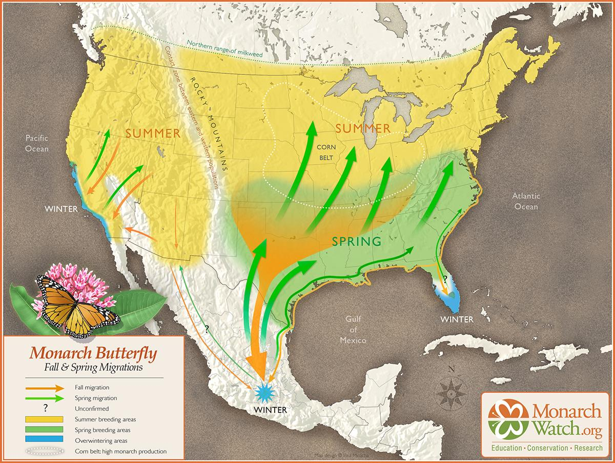 Monarch butterfly migratory patterns in the U.S. and Mexico (Courtesy MonarchWatch.org)