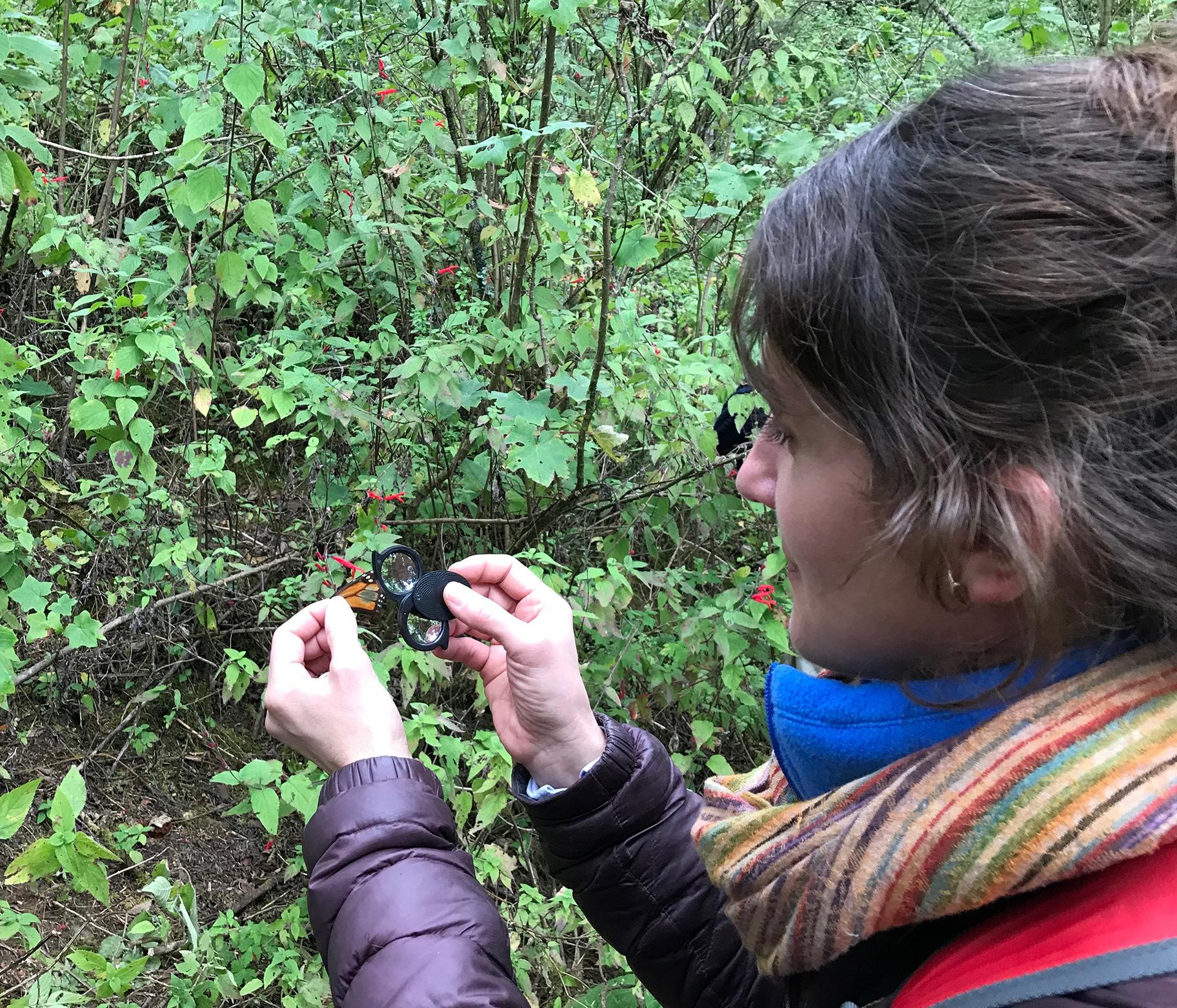 Field Museum senior conservation ecologist Abigail Derby Lewis examines a monarch butterfly. (Courtesy The Field Museum)