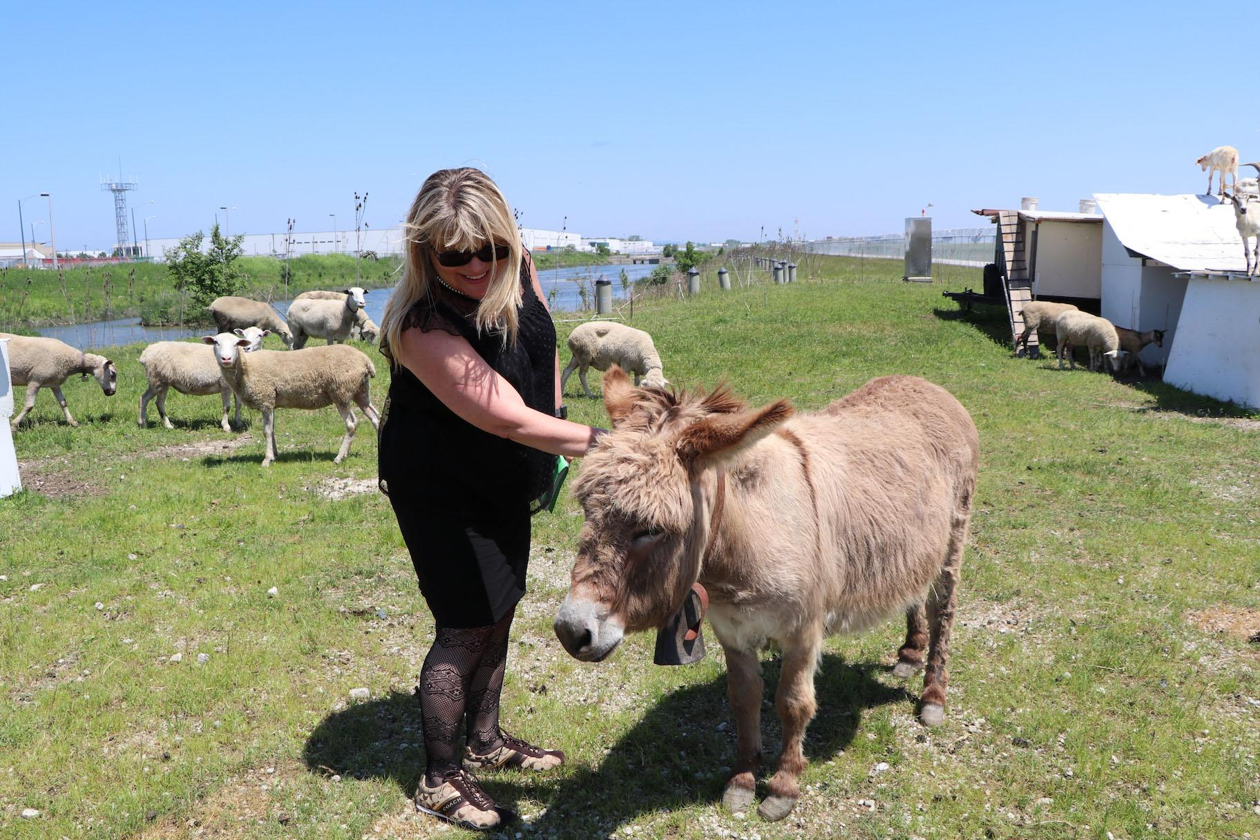 Chicago Department of Aviation Commissioner Jamie Rhee pets Jackson the donkey. (Evan Garcia / WTTW)