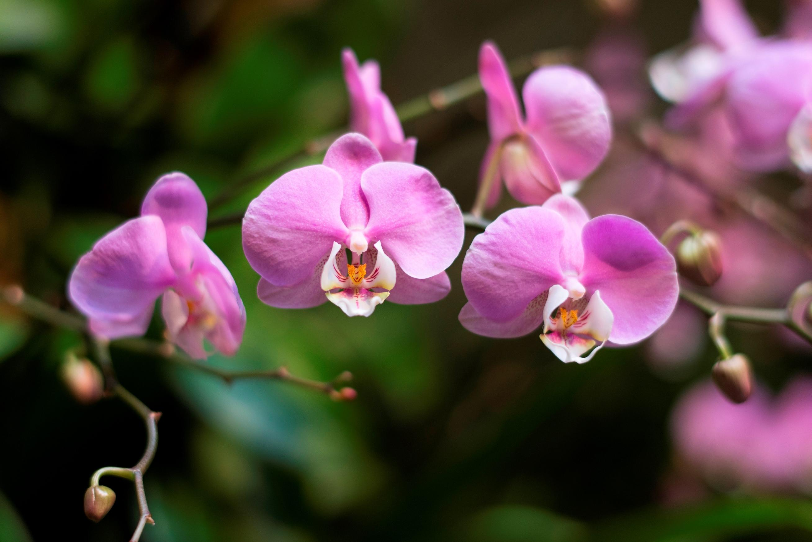 Spring is almost here stop and smell the flowers at these events the final day to check out the chicago botanic gardens orchid show is sunday march 13 robin carlson chicago botanic garden izmirmasajfo