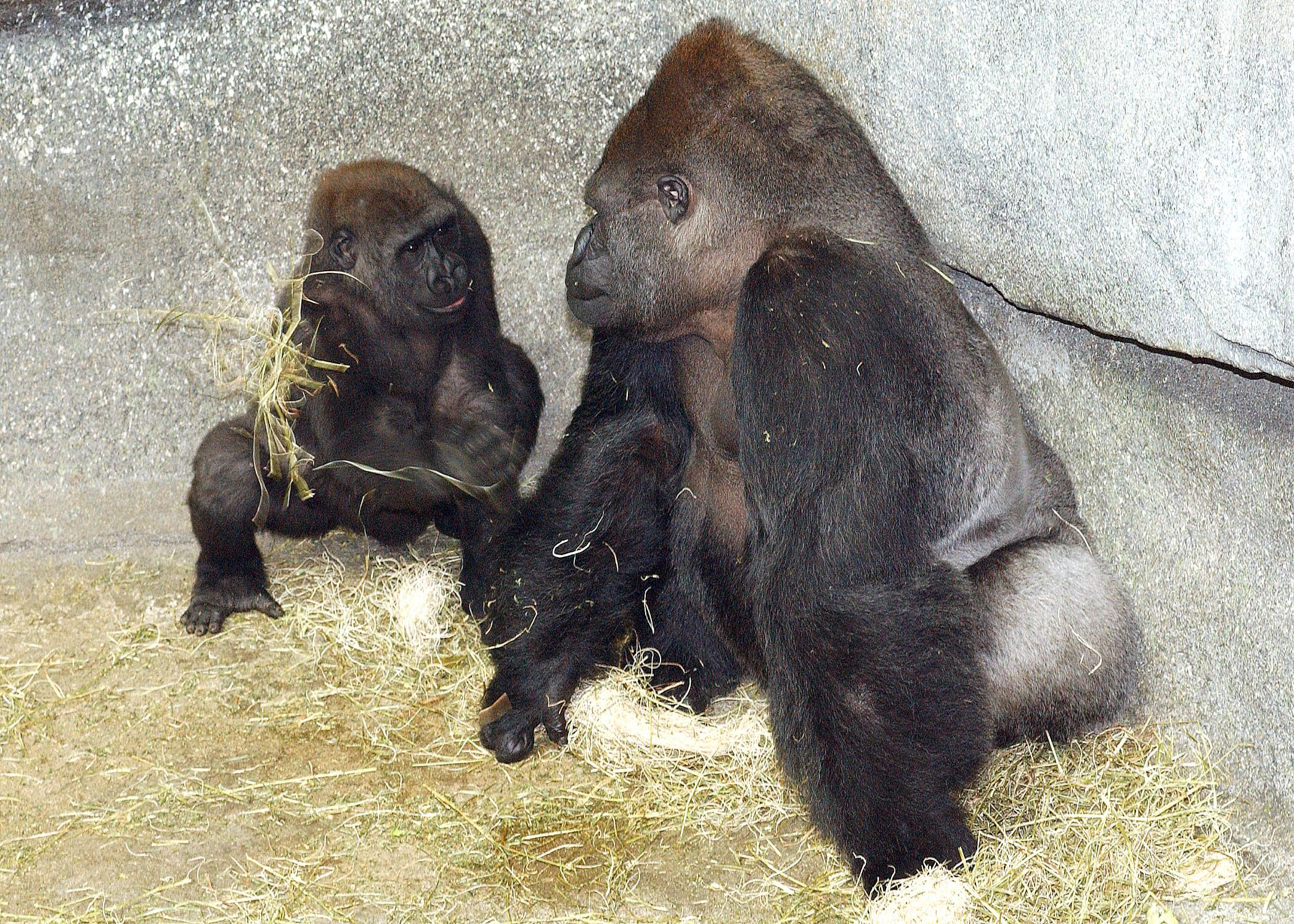 Ramar and son Nadaya in 2005. (Courtesy Chicago Zoological Society)