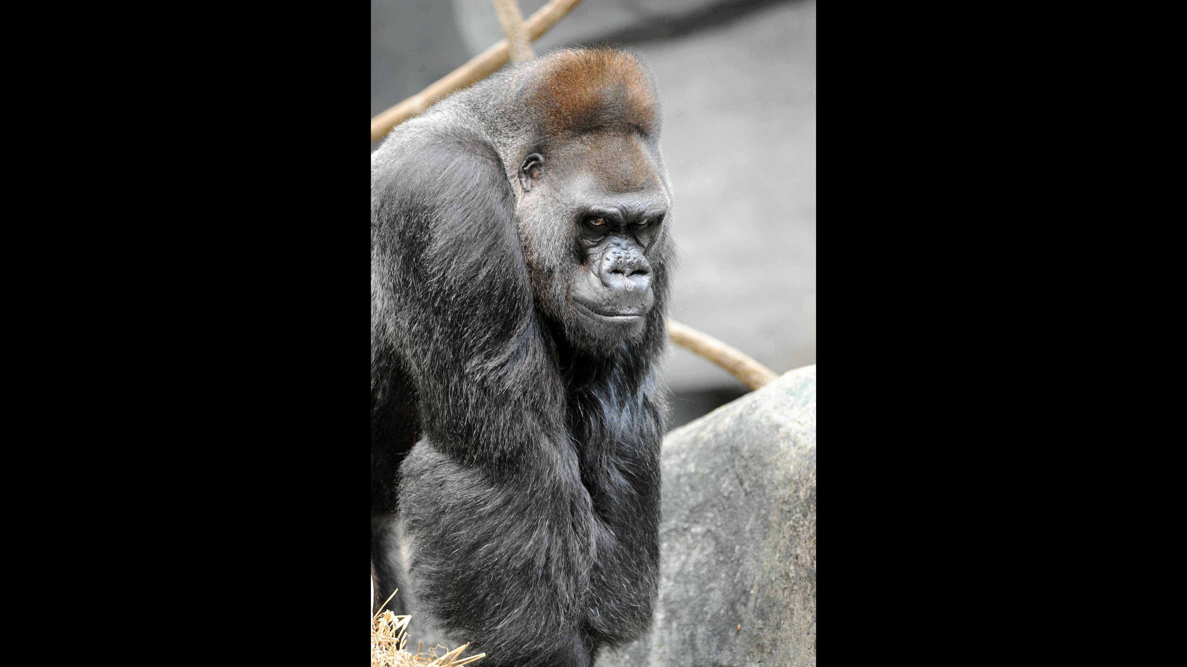 Ramar in 2009. (Courtesy Chicago Zoological Society)