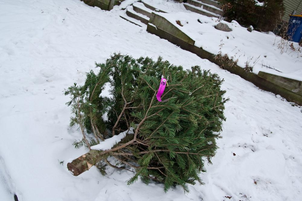 Christmas Tree Recycling Program Begins Tuesday in Chicago ...