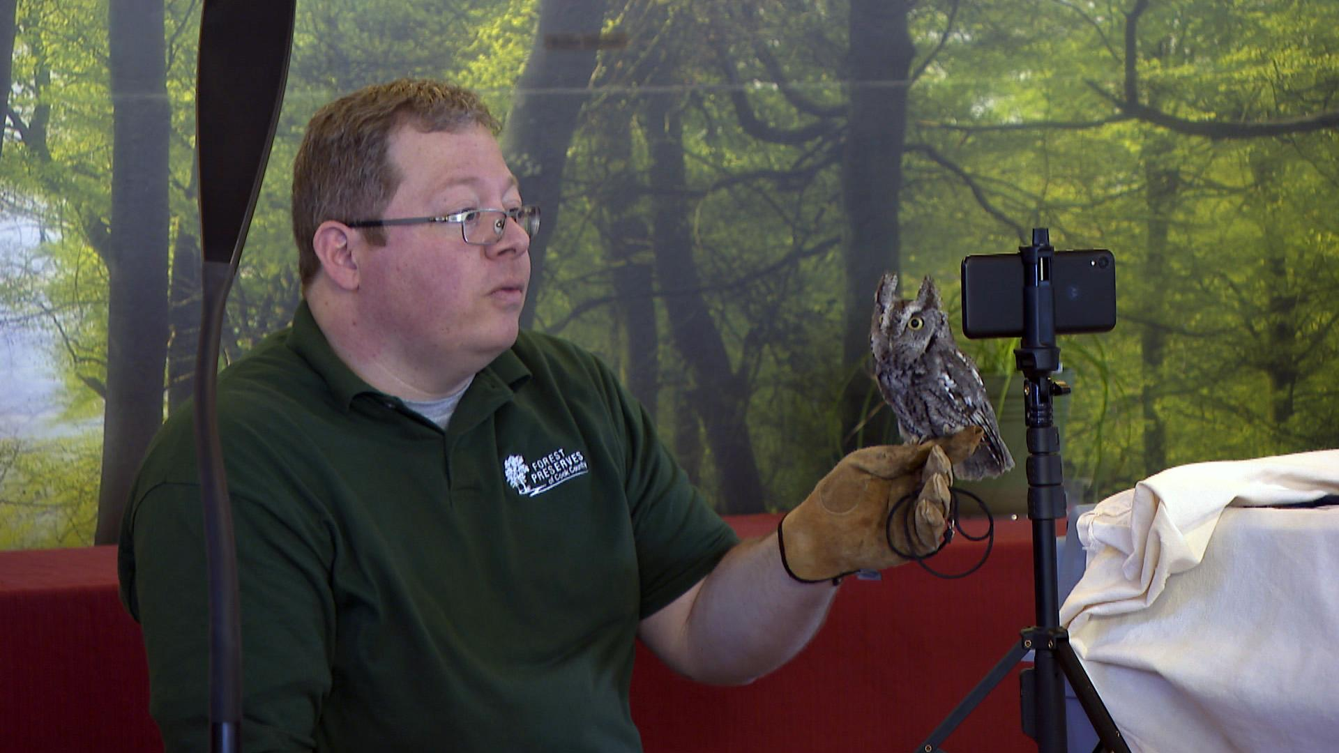 """As part of the program """"Two Owls and a Naturalist,"""" Cook County Forest Preserves naturalist Ryan DePauw broadcasts live via Facebook with a eastern screech owl, one of the smallest owls found in the region, at the River Trail Nature Center on Feb. 18, 2021. (WTTW News)"""
