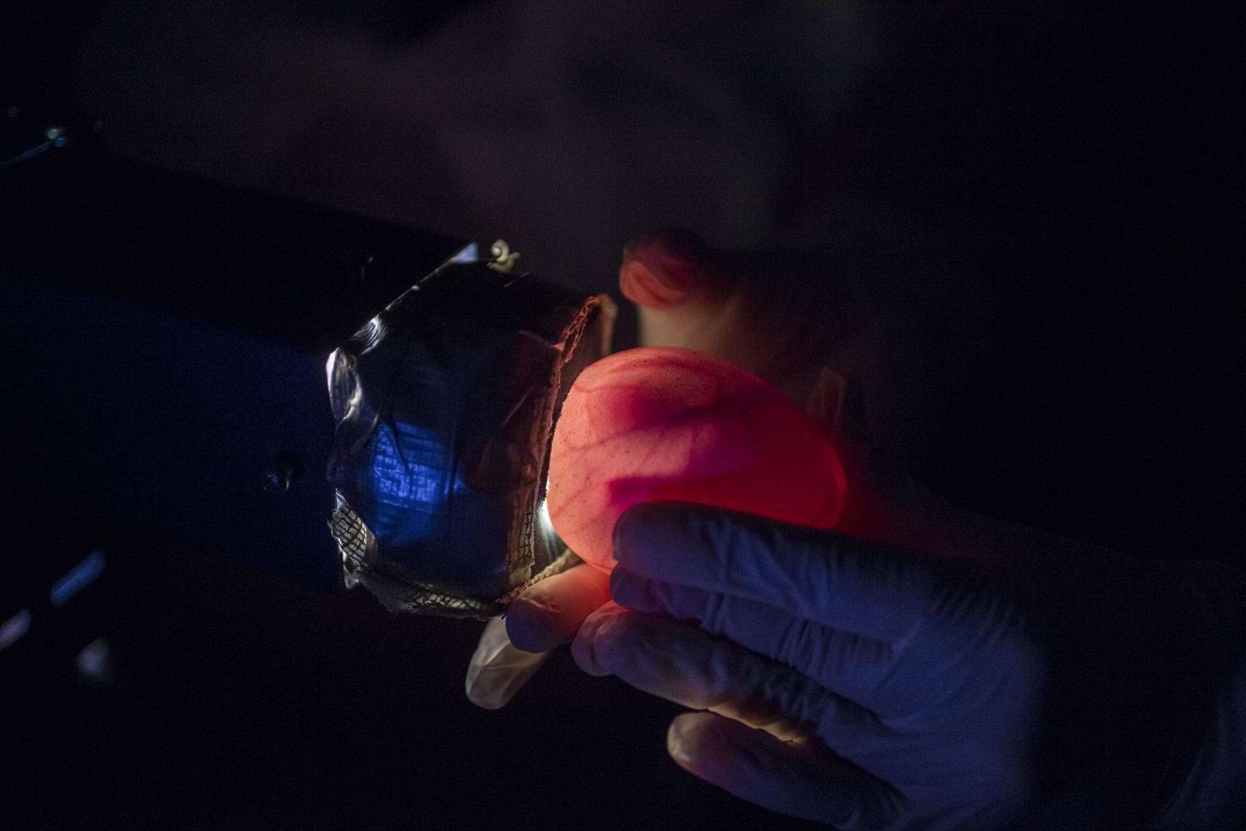 A Shedd Aquarium specialist uses a strong light to observe inside the penguin egg and monitor the chick's growth as part of a process known as candling. (Courtesy Shedd Aquarium)