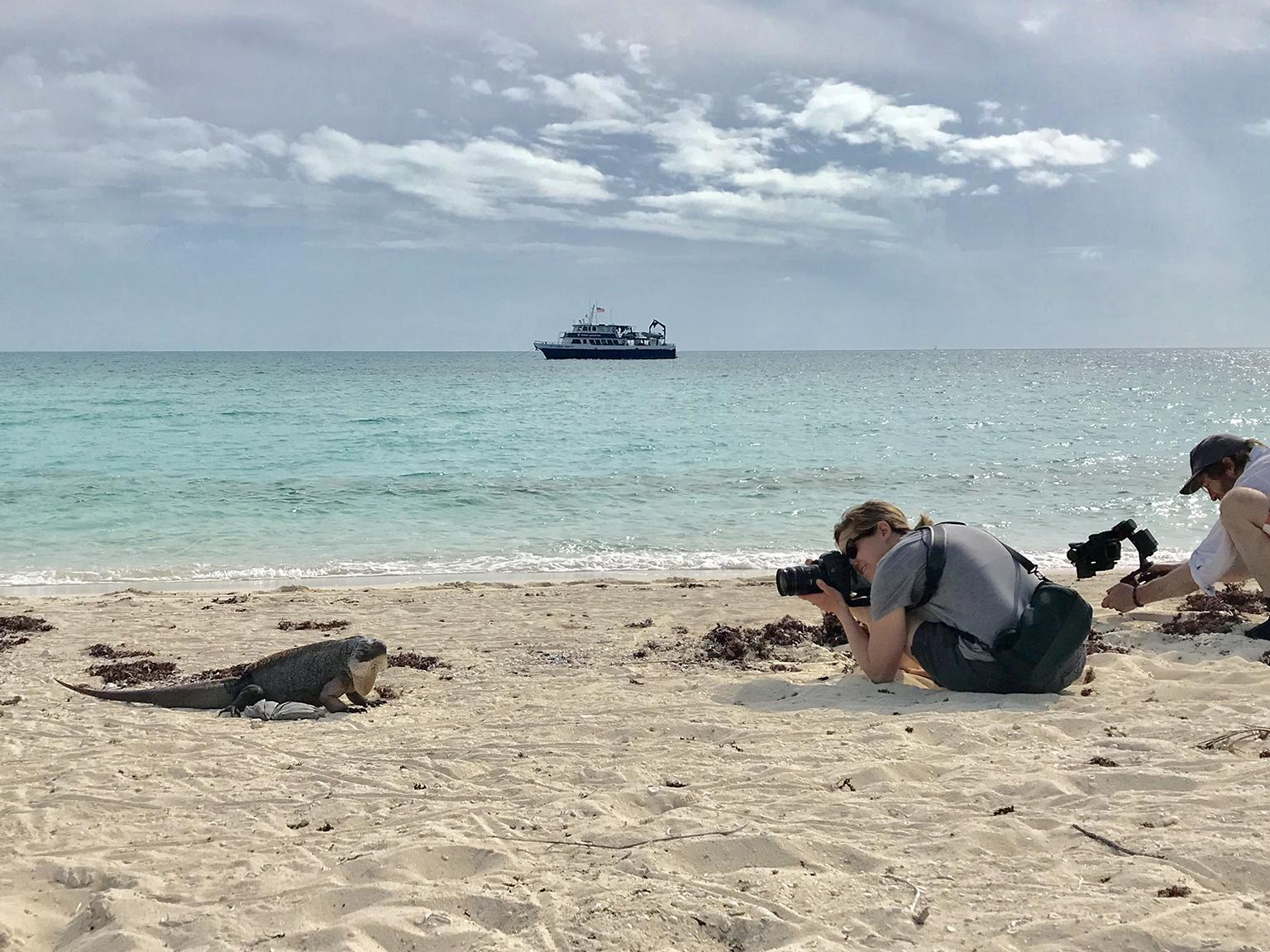 Shedd Aquarium's Brenna Hernandez photographs an iguana in the Bahamas. (Brenna Hernandez / Shedd Aquarium)