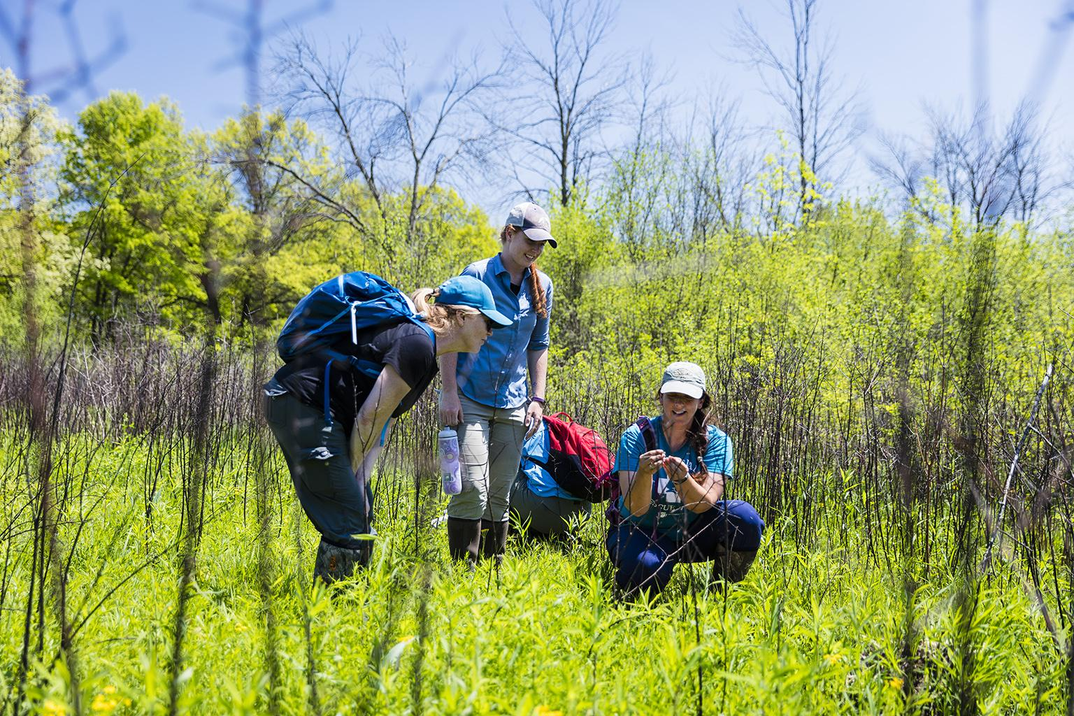 Staff from the Peggy Notebaert Nature Museum conduct field work. (Courtesy Peggy Notebaert Nature Museum)