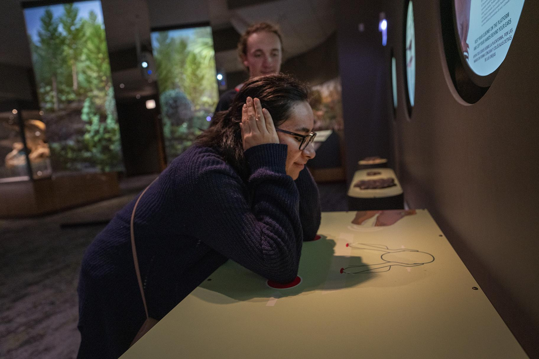Bone conduction technology lets visitors hear and feel Sue the T. Rex's subsonic rumble. (Martin Baumgaertner / Field Museum)