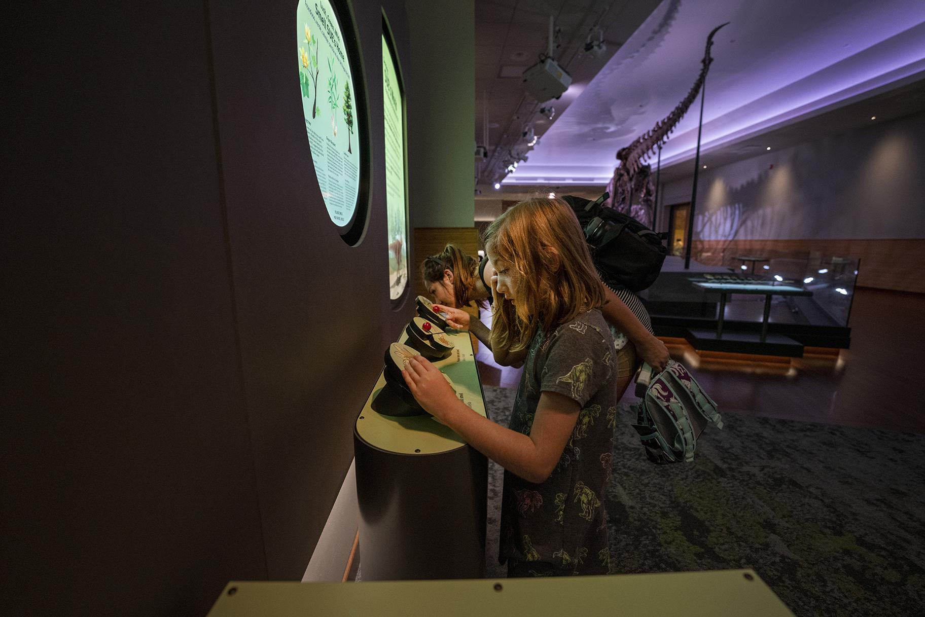 Thanks to research on fossil plants, Field Museum visitors can now experience what the Late Cretaceous forest traversed by Sue the T. Rex might have smelled like. (Martin Baumgaertner / Field Museum)