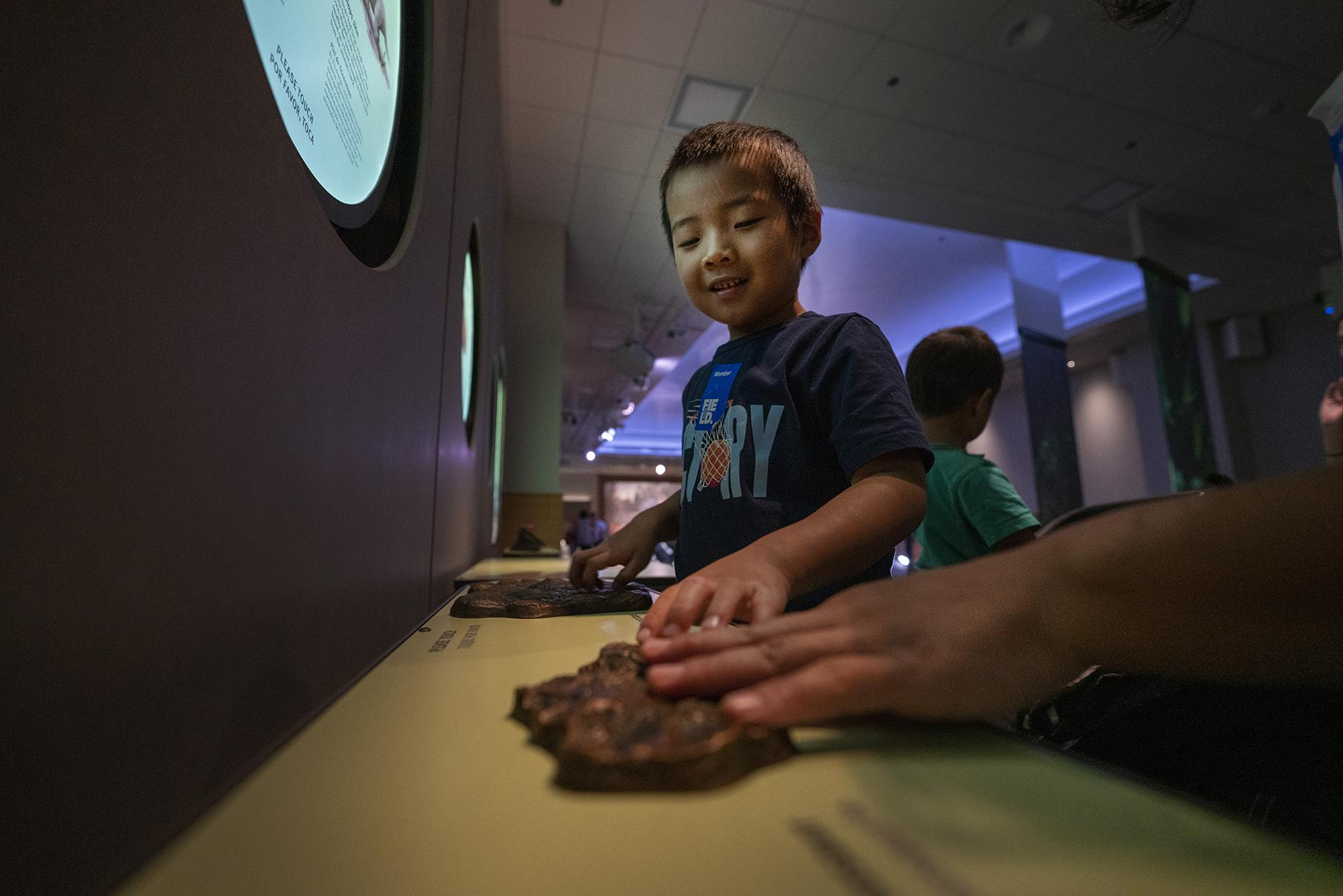 Visitors can feel how the skin textures of various dinosaurs – including the T. Rex and Triceratops – differed as part of new multisensory stations at the Field Museum. (Martin Baumgaertner / Field Museum)