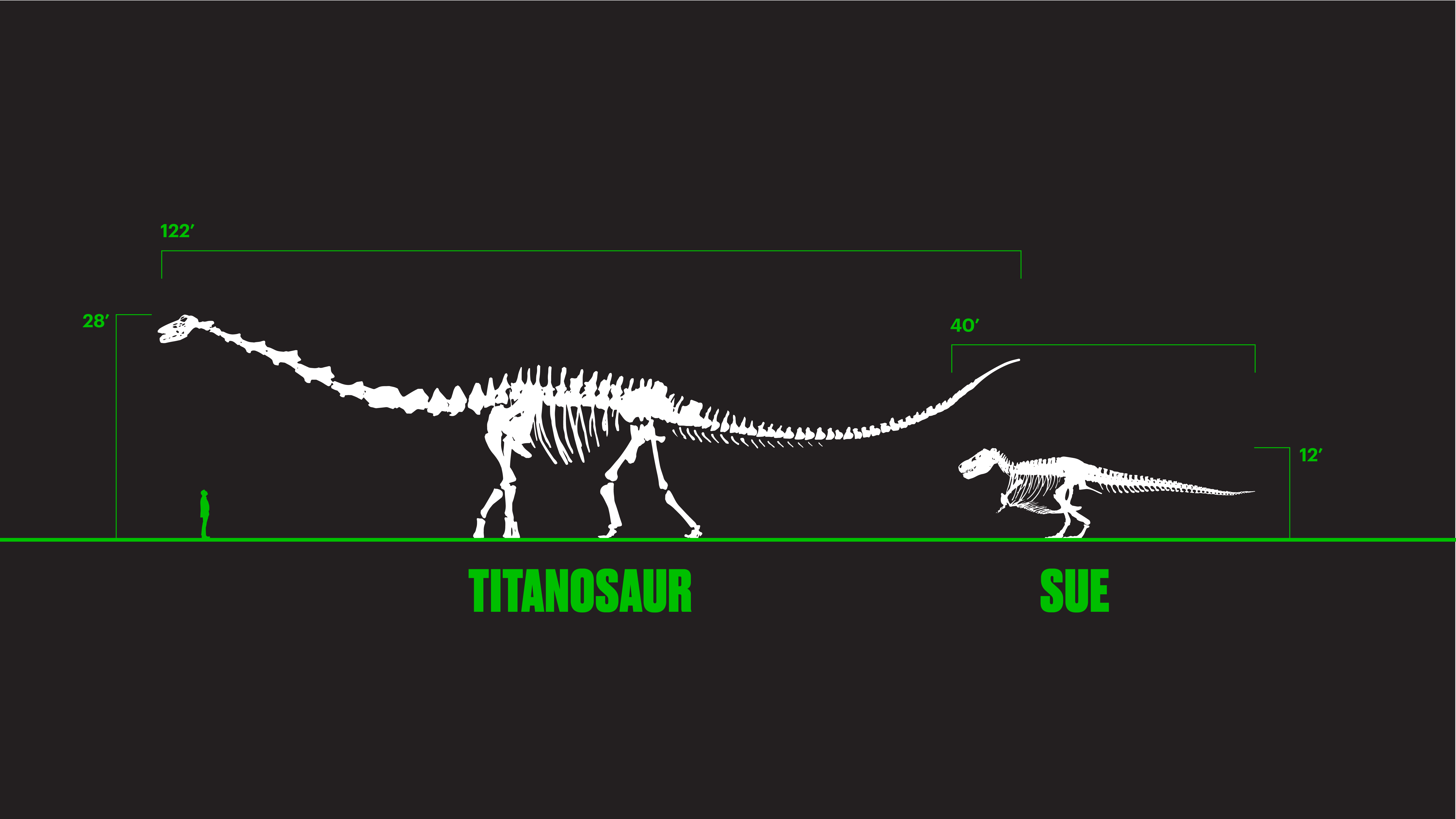 The Field Museum will soon be home to a touchable cast of the largest dinosaur ever discovered, a 122-foot long titanosaur. (Illustration courtesy The Field Museum)
