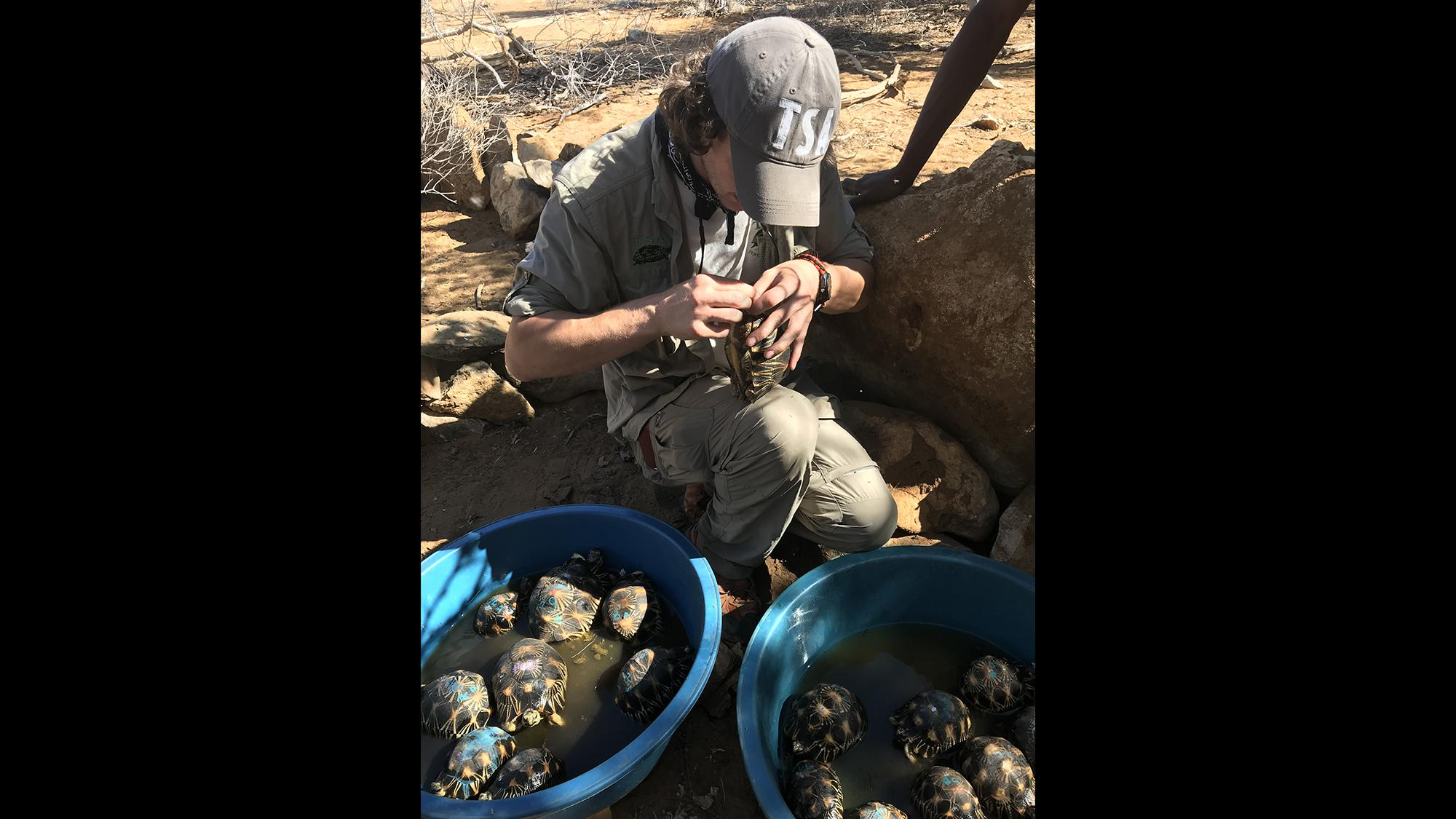 A representative of Turtle Survival Alliance examines tortoises that were found last month living in an abandoned home in Madagascar. (Courtesy Turtle Survival Alliance)