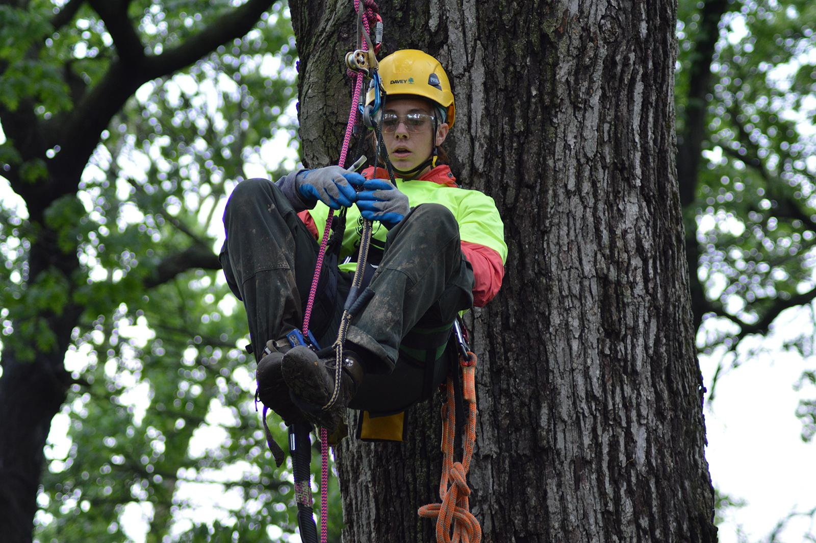 Saturday's tree-climbing event includes a demonstration for kids. (April Toney / Illinois Arborist Association)