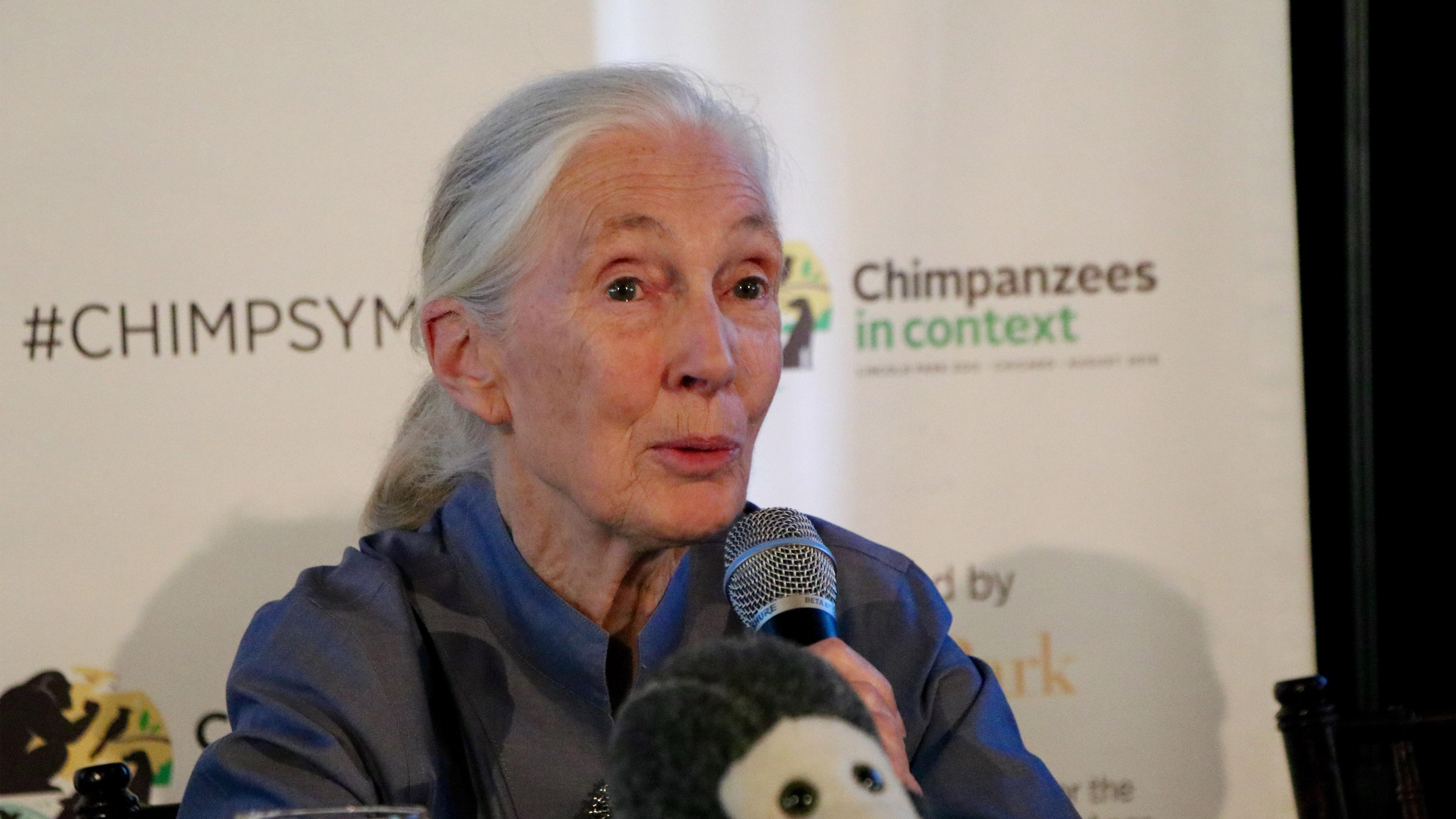 Dr. Jane Goodall speaks at the Lincoln Park Zoo on Thursday, the first day of the Chimpanzees in Context conference. (Evan Garcia / Chicago Tonight)