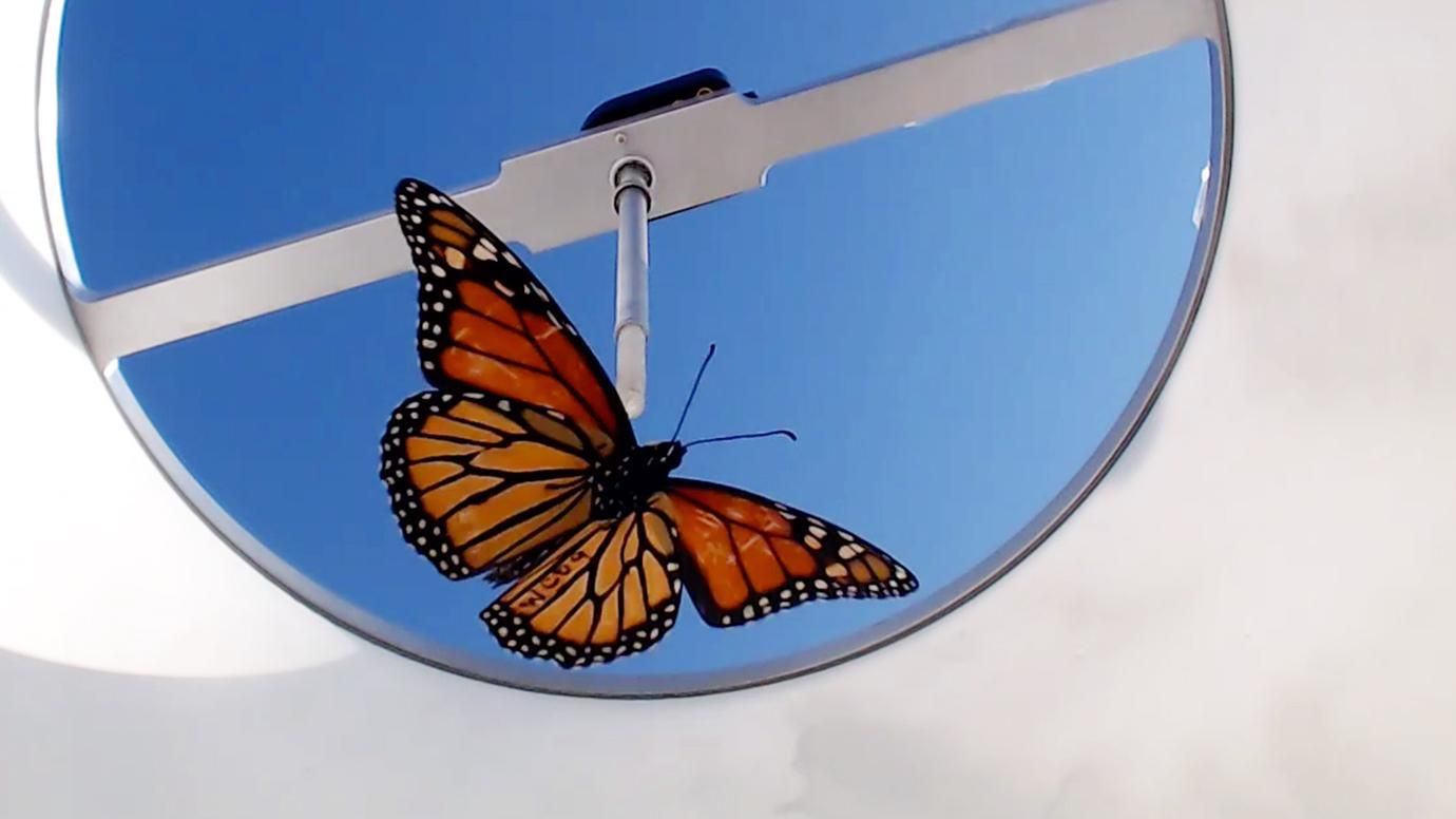 "The study's ""flight simulator,"" in which monarch butterflies were tethered and a computer monitored their direction of flight. (Courtesy Tenger-Trolander et al. / University of Chicago)"