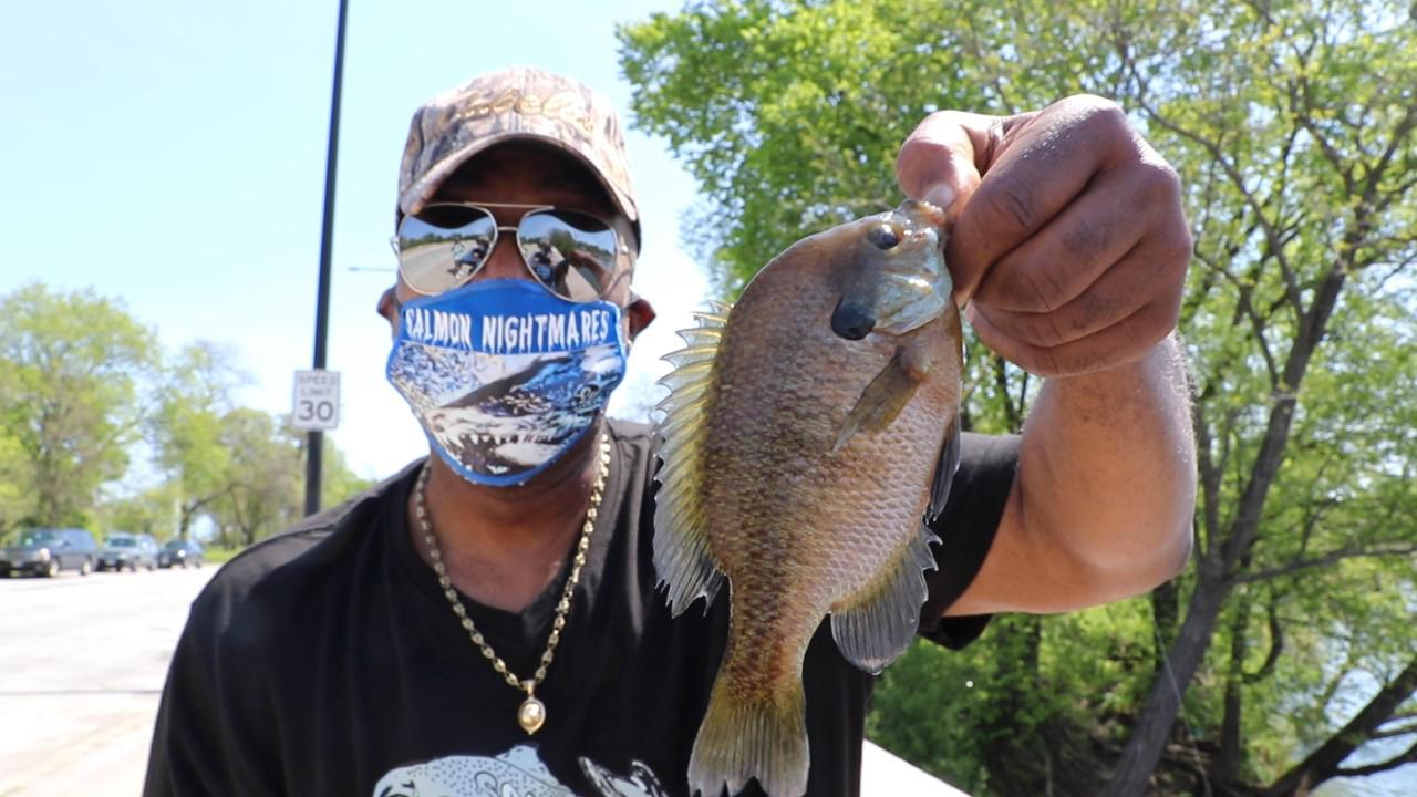 Fisherman Stephen Williams holds a bluegill he caught off a bridge in Chicago's Jackson Park on May 23. (Evan Garcia / WTTW News
