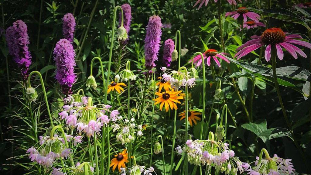 """Pete's Pollinator Place,"" a 2019 garden award winner. (Chicago Excellence in Gardening Awards / Peter Gizyn)"