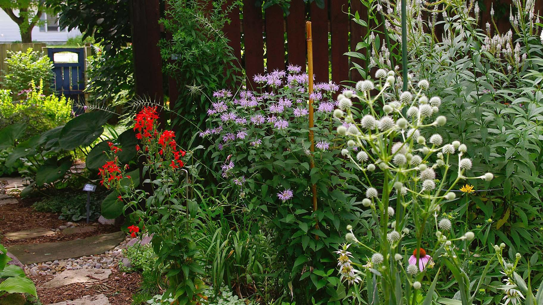 Go Figure But A Convert Your Lawn To Prairie Webinar Is The Hottest Ticket In Town Chicago News Wttw