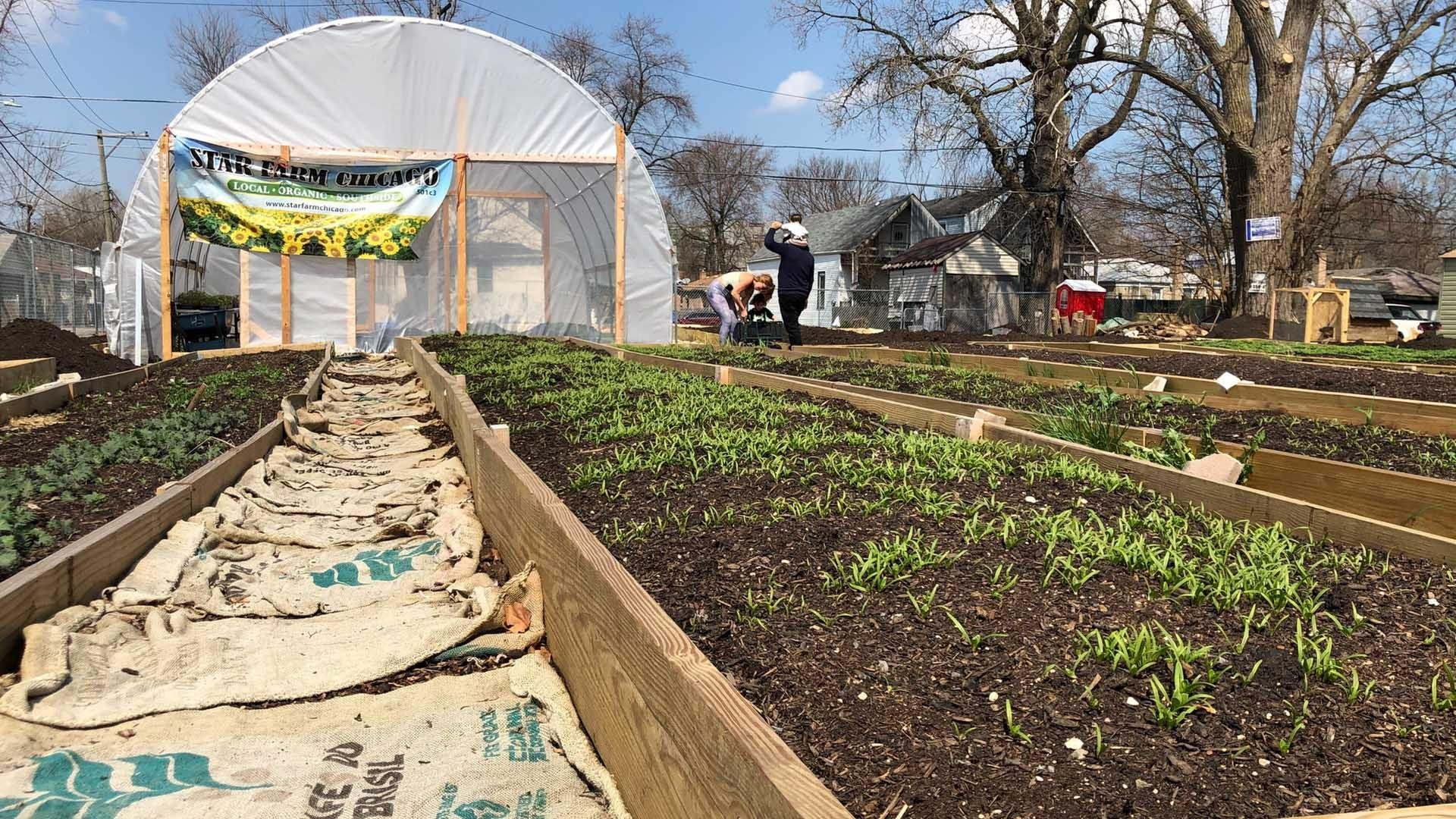 Tiny Star Farm Aims To Transform The Neighborhood That Meatpacking Built Chicago News Wttw