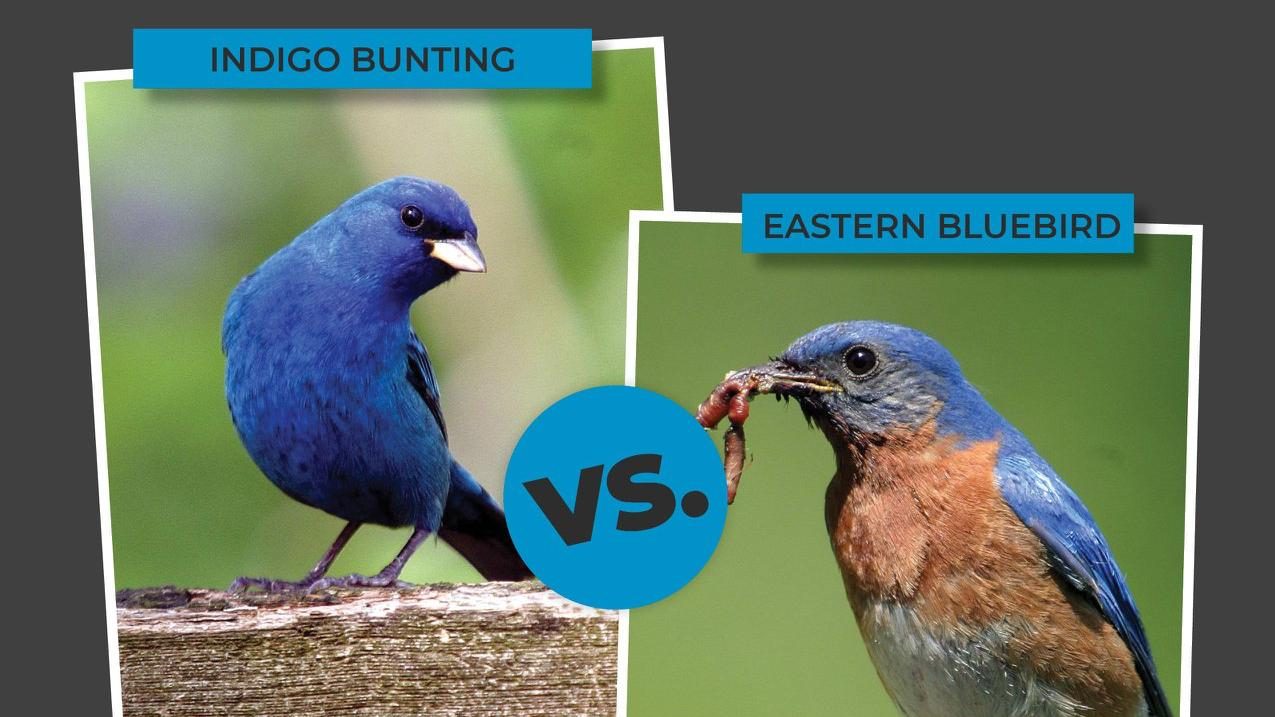 Birding enthusiasts are piggybacking on the March Madness format. (Courtesy of Forest Preserve District of Will County)