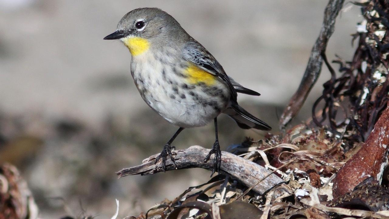 Warblers are among the birds people can expect to see at Big Marsh. (Skeeze / Pixabay)