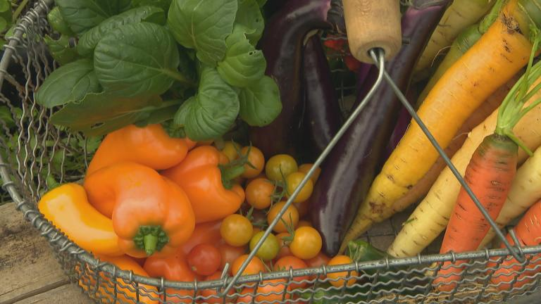 A colorful fall harvest from the WTTW organic garden.