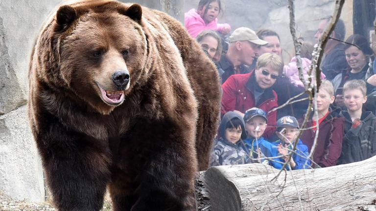 (Brookfield Zoo / Chicago Zoological Society)