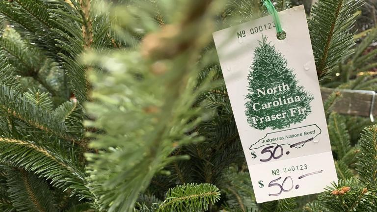 In this Monday, Dec. 9, 2019, photo, a North Carolina Fraser fir Christmas tree is for sale in Lenoir, N.C. A Christmas tree shortage is being blamed on the Great Recession. Poor sales a decade ago, limited the number of trees planted, which are being harvested this year. (AP Photo / Sarah Blake Morgan)
