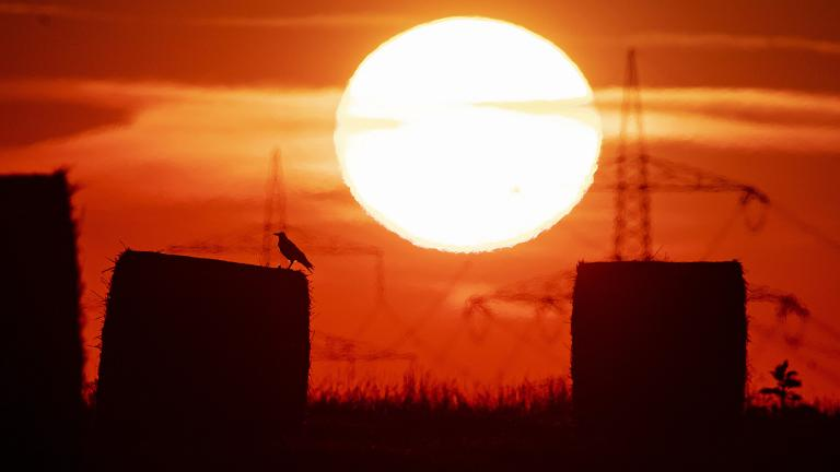 In this file photo dated Thursday, July 25, 2019, a bird sits on a straw bale on a field in Frankfurt, Germany, as the sun rises during an ongoing heatwave in Europe. (AP Photo / Michael Probst, FILE)