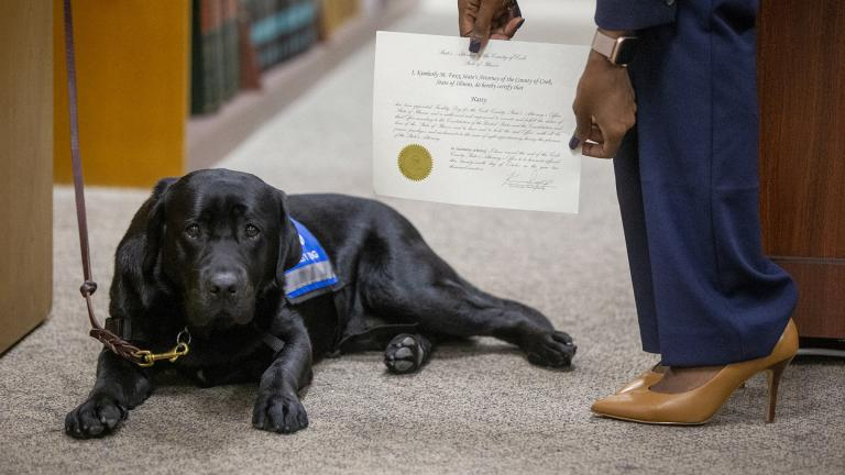 In this Tuesday, Oct. 29, 2019 photo, Cook County State's Attorney's first facility dog Hatty is sworn in by Cook County State's Attorney Kimberly Foxx at the George N. Leighton Criminal Courthouse in Chicago's Little Village neighborhood. (Camille Fine / Chicago Tribune via AP)