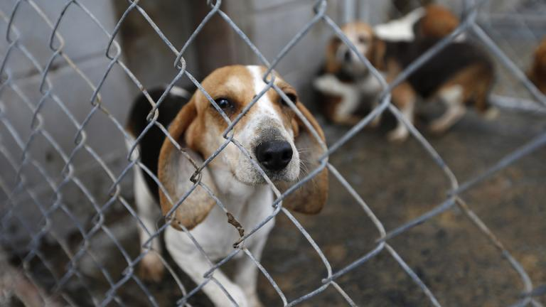 Research by the Humane Society of the United States has found that many puppy mills cited by state agencies went on to receive entirely clean inspection reports from the USDA. (Courtesy Humane Society of the United States)