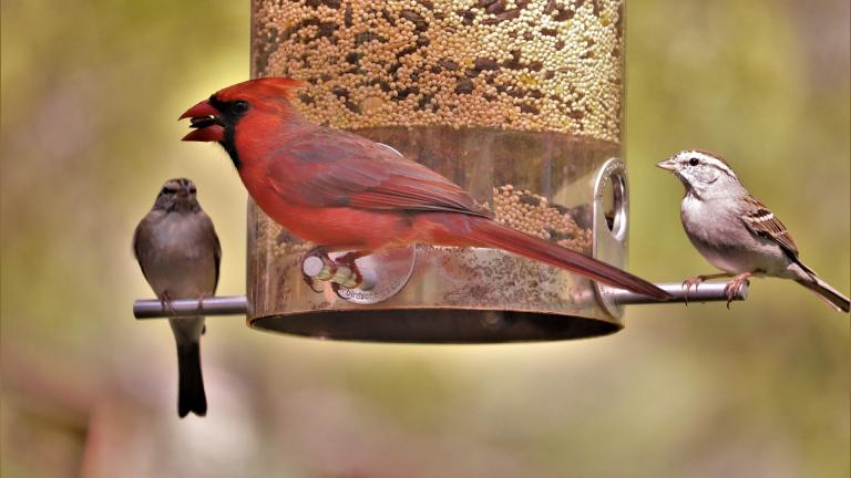 It's OK to have bird feeders and baths in outdoor spaces, wildlife officials said, but be sure to keep them clean. (Pixabay / GeorgeB2)