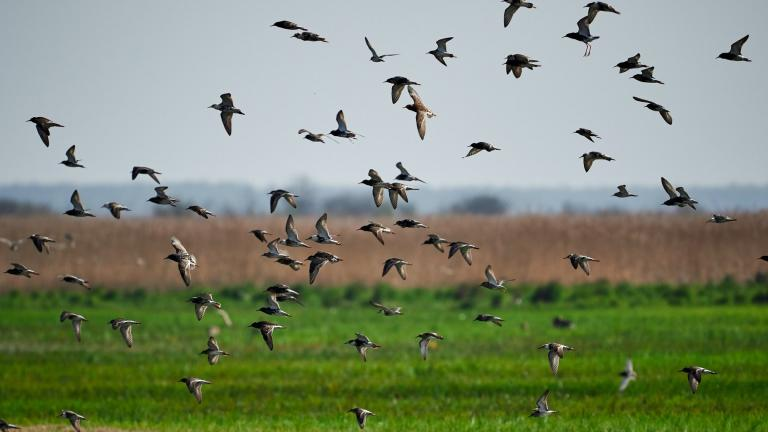 More than 30 million migrating birds will pass over Illinois in the coming days. (Dariusz Grosa / Pexels)