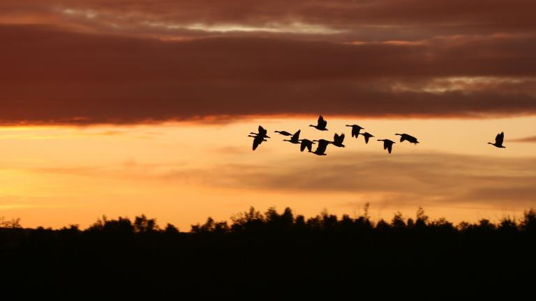 Hundreds of millions of birds are migrating through the U.S. Sept. 3-6. (hollandevens / Pixabay)
