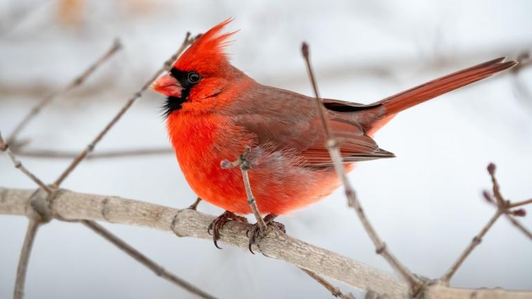 The 2021 Great Backyard Bird Count runs Feb. 12-15. (Tina Nord / Pexels)