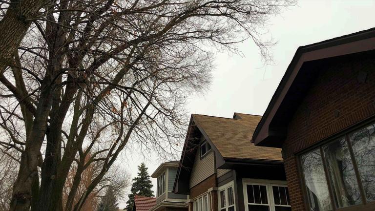 If it seems like January is relentlessly gray, you're not imagining it. (Patty Wetli / WTTW News)