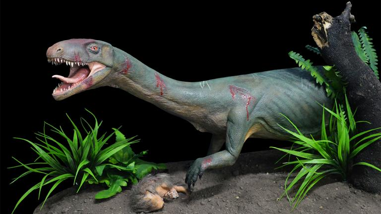 Life model of the new species Teleocrater rhadinus, a close relative of dinosaurs, preying upona juvenile cynodont, a distant relative of mammals. (Museo Argentino de Ciencias Naturales)