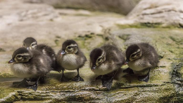(Brenna Hernandez / ©Shedd Aquarium)