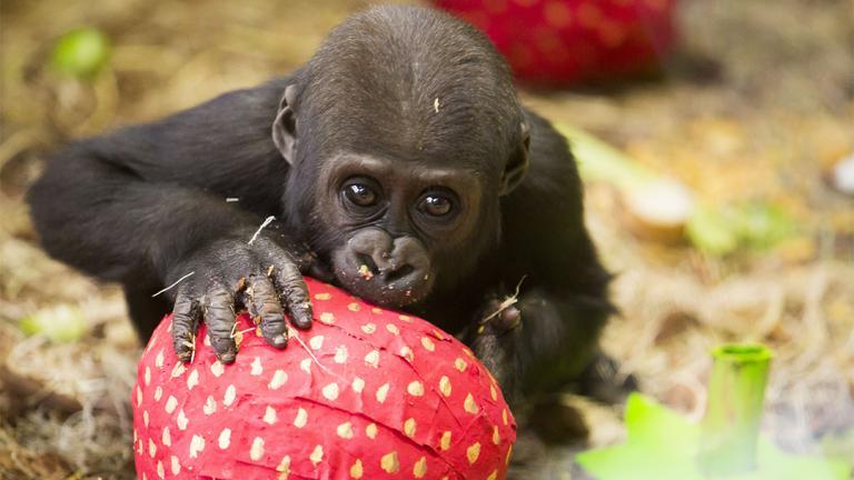 (Todd Rosenberg / Lincoln Park Zoo)