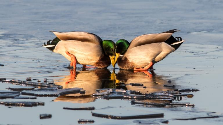 One of the 2020 photo contest winners, taken at Oak Forest Heritage Preserve. (Credit: Sharon Dobben)