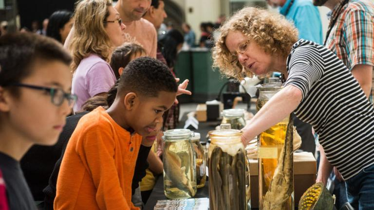 Field Museum ichthyologist Susan Mochel talks with visitors at the museum's ID Day in 2017. (Courtesy Field Museum)
