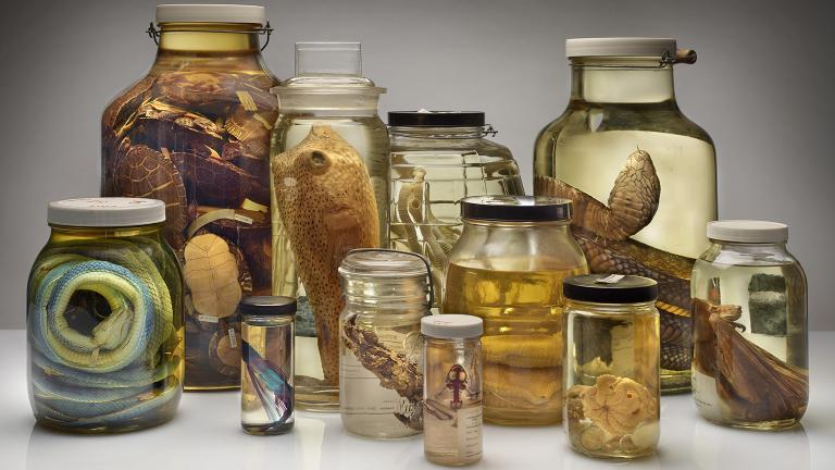 Specimens preserved by alcohol at the Field Museum (John Weinstein / The Field Museum)