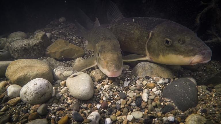 (Karen Murchie / ©Shedd Aquarium)